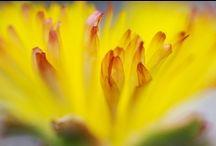In My Garden 2 / by Ellen Jones