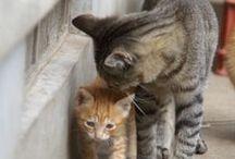Cats / by Eline de Draaijer