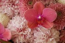 flowers in pink (designed by trémolo) / by fleurs trémolo yukinobu fujino