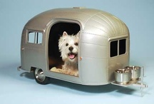 Pet-chitecture / Pet related furniture and accessories. / by Linda Chumbley