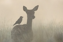 owls and deers  / by Laurita .