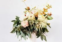 Foliage / this used to be wedding flowers only, now it's plants and flower arrangements too. / by Sarah VanCamp Kern