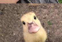 makes you wana say awwwwwww... / Mostly animals, but all cute.  / by Jenna Robinson