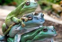 Frogs, Toads, Their Relatives / by Linda Richardson