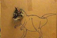 Cats / by Rachael Lloyd