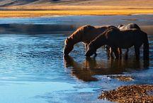 Beautiful! / by Roberta Loa