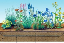 The Rain Garden  / A rain garden is a garden with a shallow depression which is strategically located on a property to capture stormwater runoff from impervious surfaces, such as rooftops, patios, driveways, and parking lots, before it enters the storm water system. The water is held by the garden and allowed to slowly infiltrate the soil. The soil and plant roots use natural processes to improve water quality by filtering pollutants, the overall amount of stormwater runoff is reduced. / by Lawncare Plus Design~Landscaping Hardscaping Patios Gardening