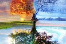 Seasons Change / by Cindy Lea