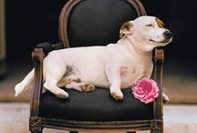 Dogs / by Amy Chalmers - Maison Decor