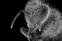 Bees & Beekeeping / by Chris Koester