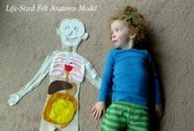 Education: Health/Anatomy / by Shellie Person