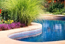 Gardens & Landscaping / by Ginger Thomas