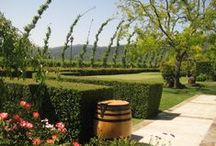 My Tour of Napa & Sonoma Valley / by Megan Zachman