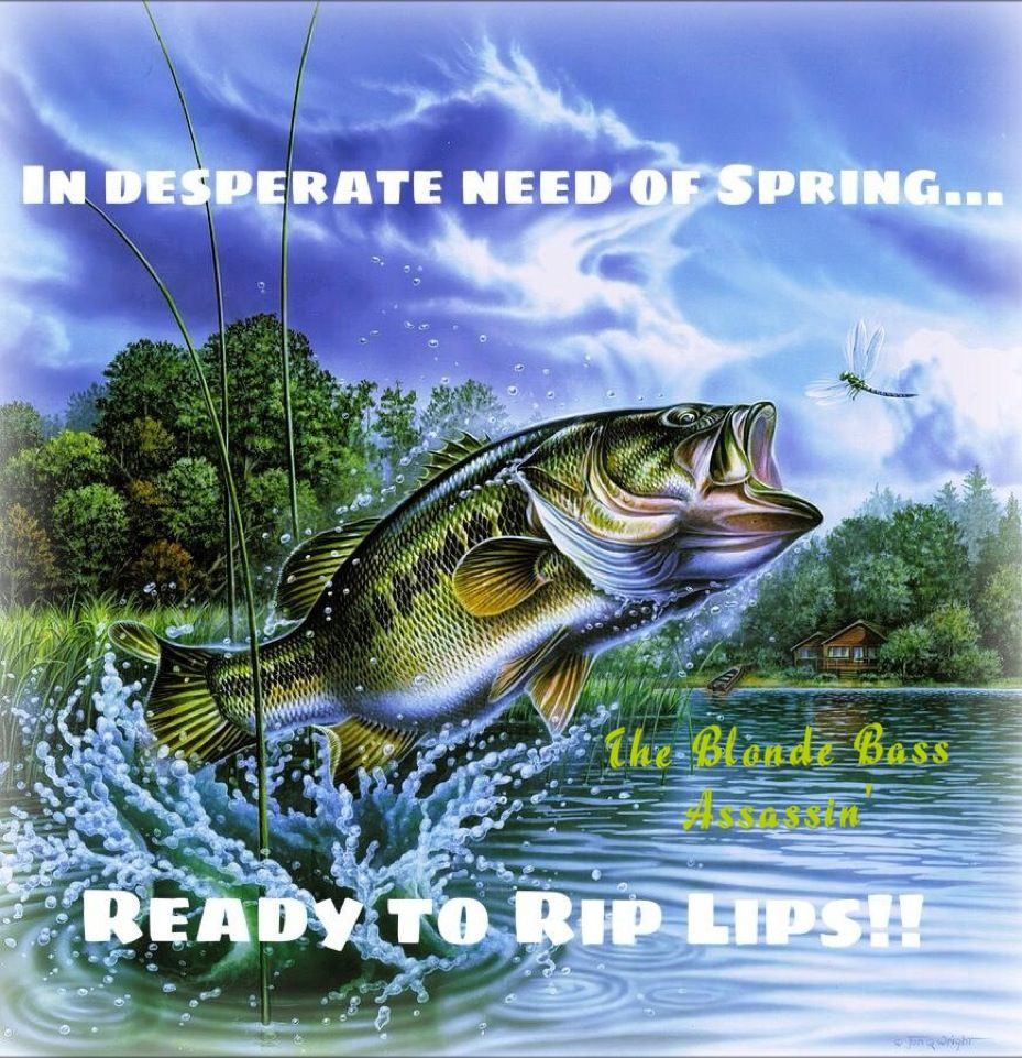 Come on spring bass fishing pinterest for Spring bass fishing