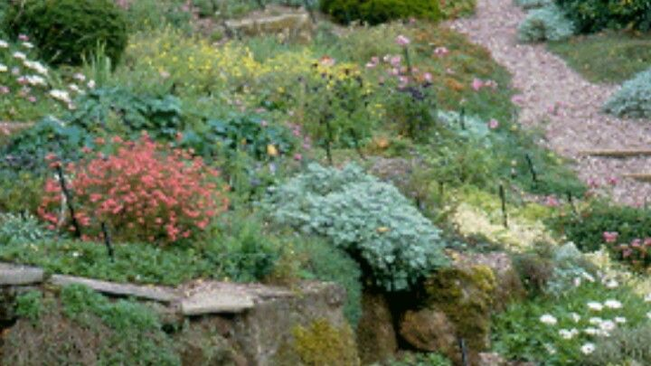 Low growing plants for slope and rocks landscape pinterest for Low growing plants for landscaping
