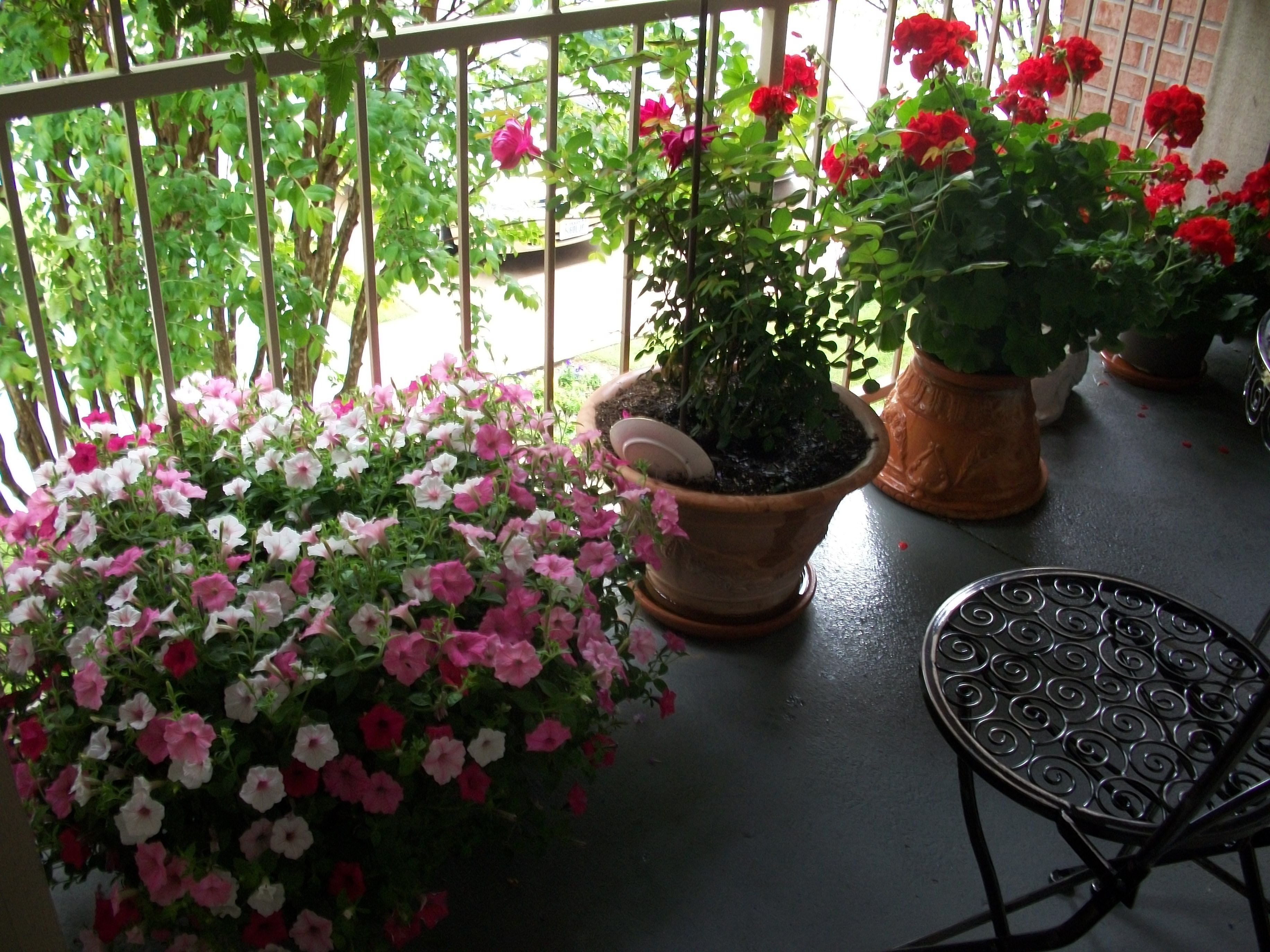 Balcony garden flowers gardens pinterest for Balcony flowers