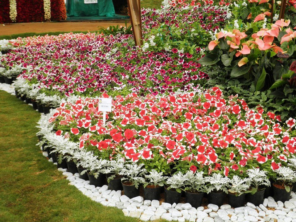 Beautiful flower bed gardens pinterest for Beautiful flower beds
