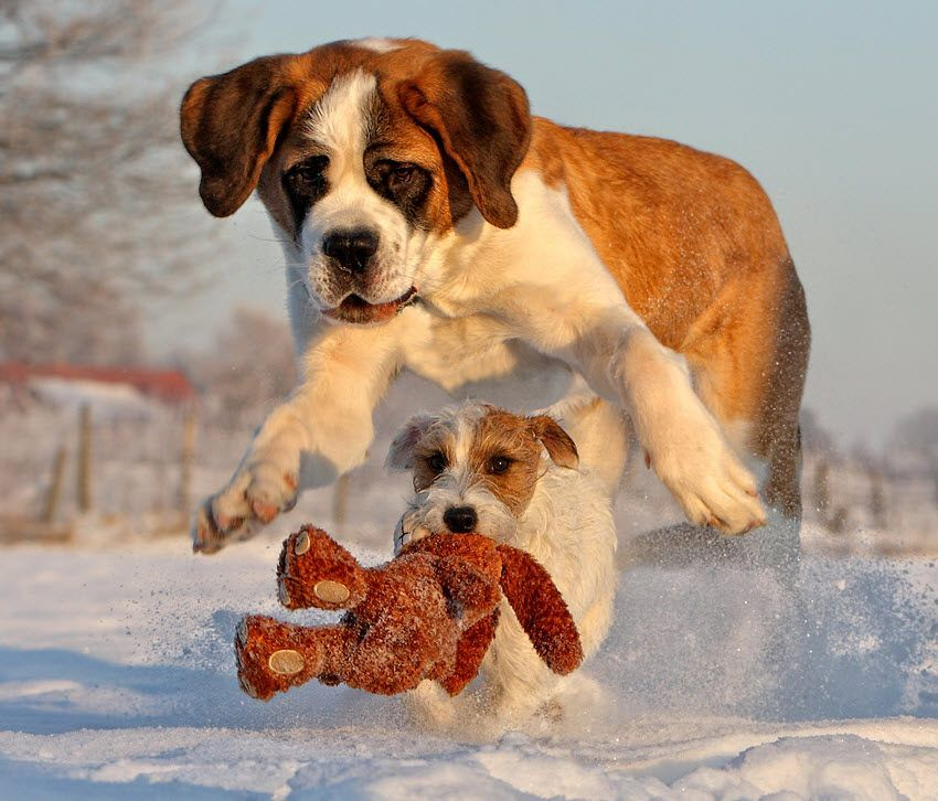 Cute Puppies Playing in Snow Cute Puppies Playing