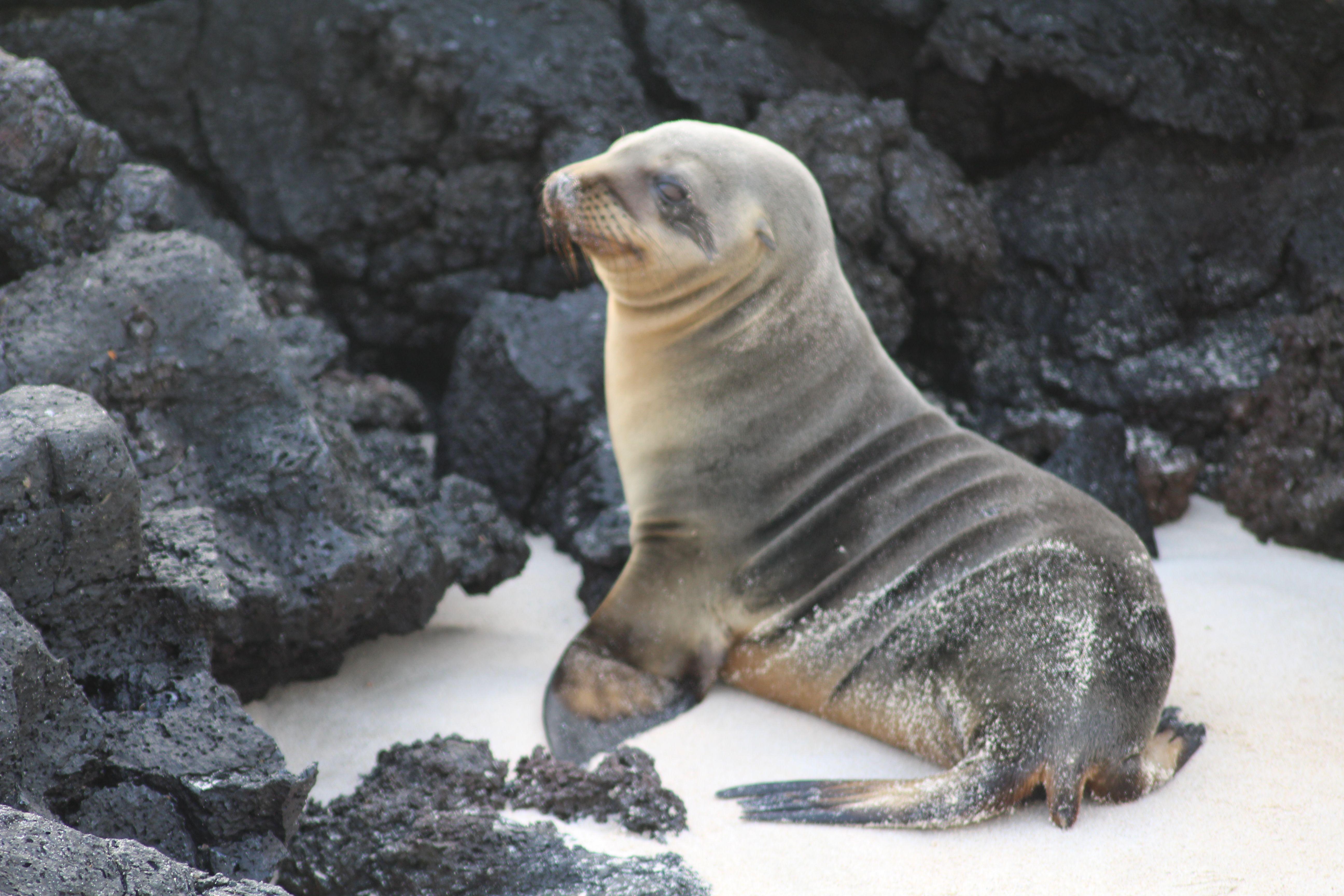 cute baby sea lions