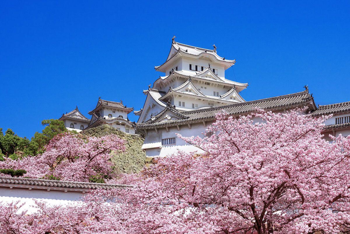 姫路城の画像 p1_23