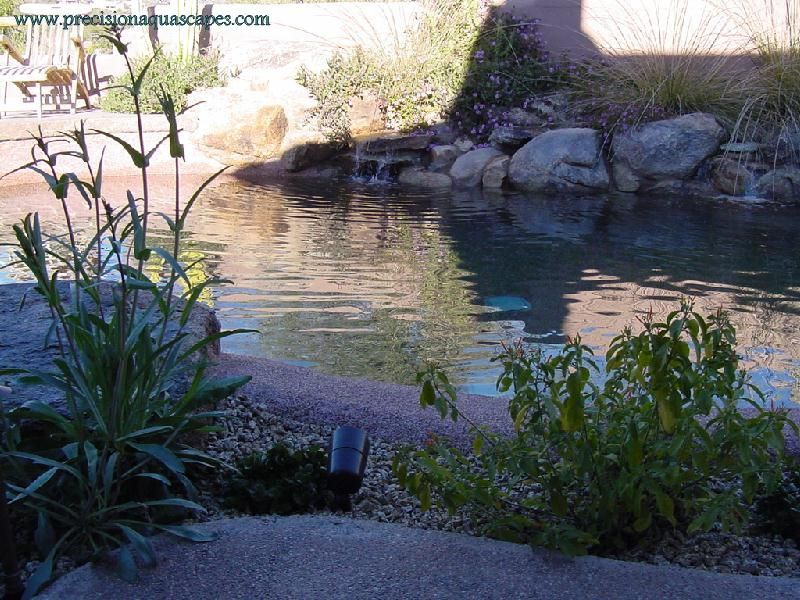 Natural Looking Backyard Pool : Natural look pool  pools and outdoor living  Pinterest
