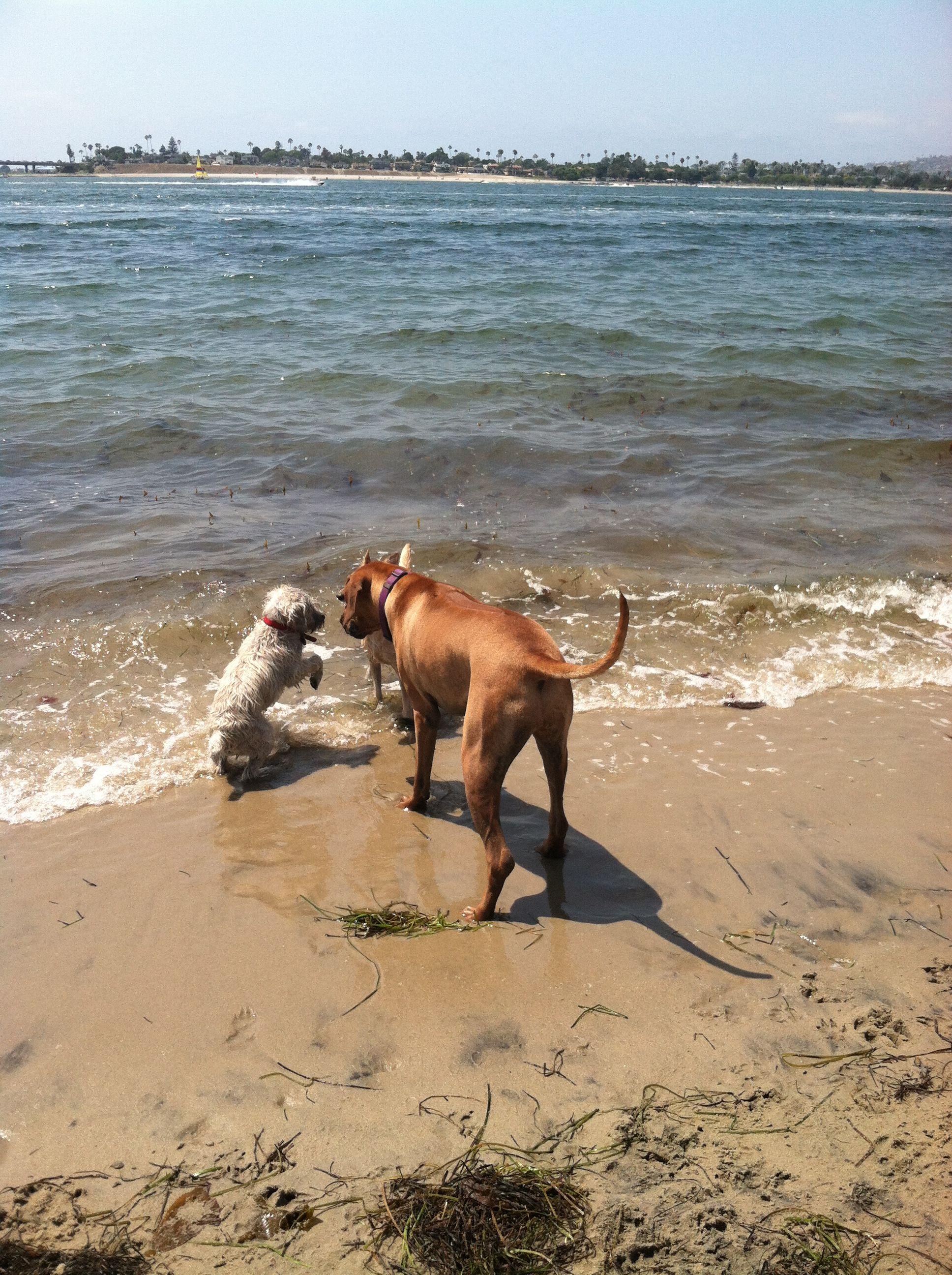 Fiesta Island San Diego Dog Park