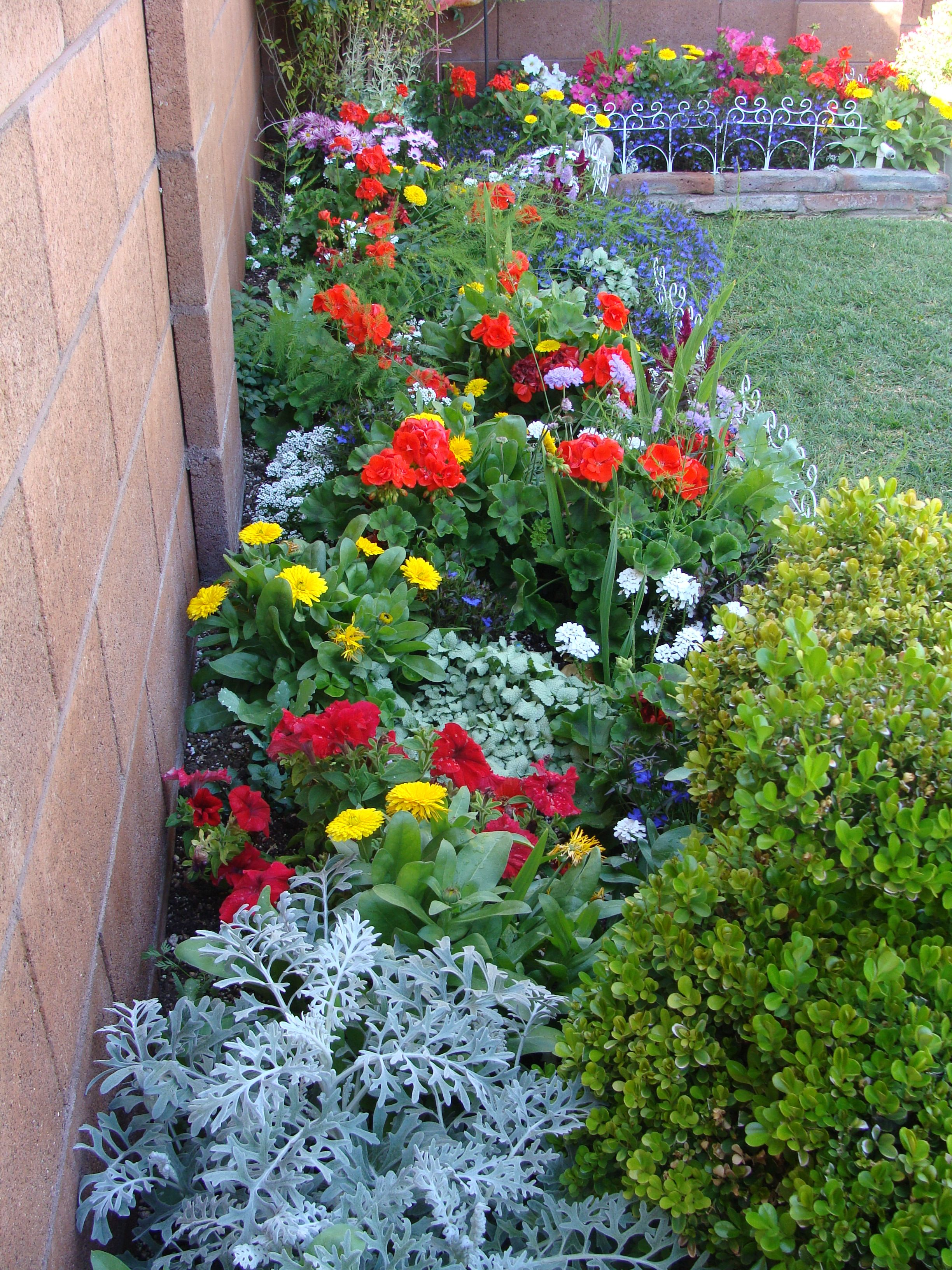 My spring flower bed plants and flowers pinterest for Flowers for flower beds