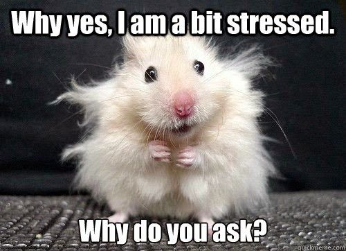 thesis stress meme High-stress high school what's the balance between preparing students for college and ensuring they aren't killing themselves in the process alexandra ossola.