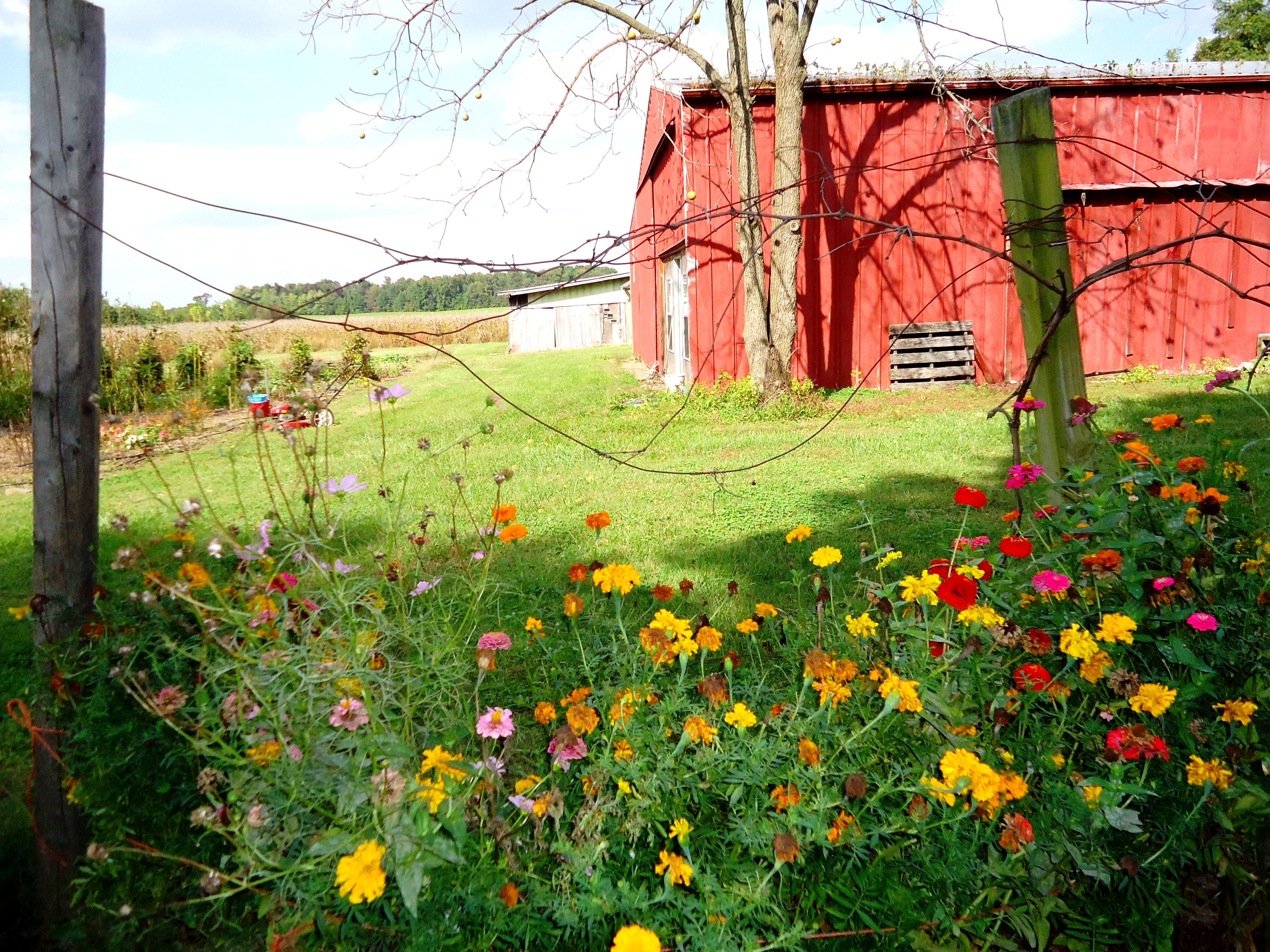 Barn (Smith Sister Farms, Portland, TN) | Smith Sisters' Farms | Pint ...