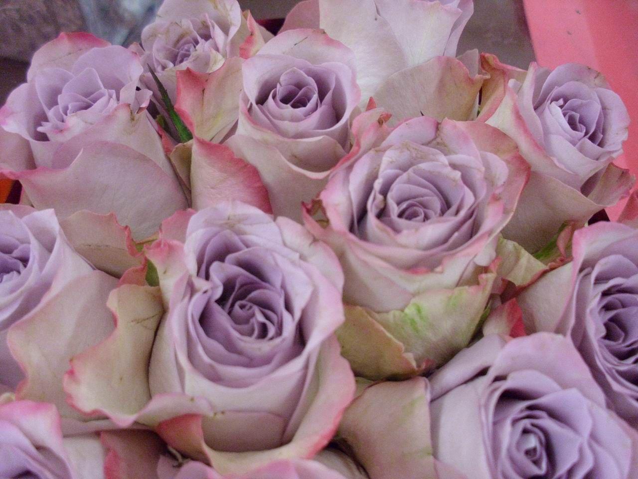 Rose mauve je vois la vie en mauve purple pinterest for Mauve la vie claire