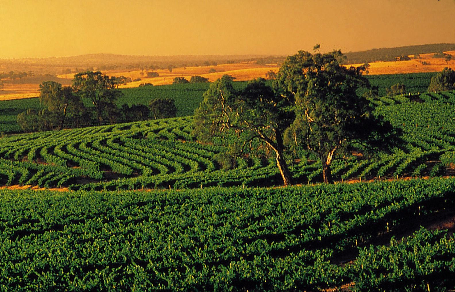 Barossa Valley Australia  city pictures gallery : Barossa Valley, South Australia | Travel. | Pinterest