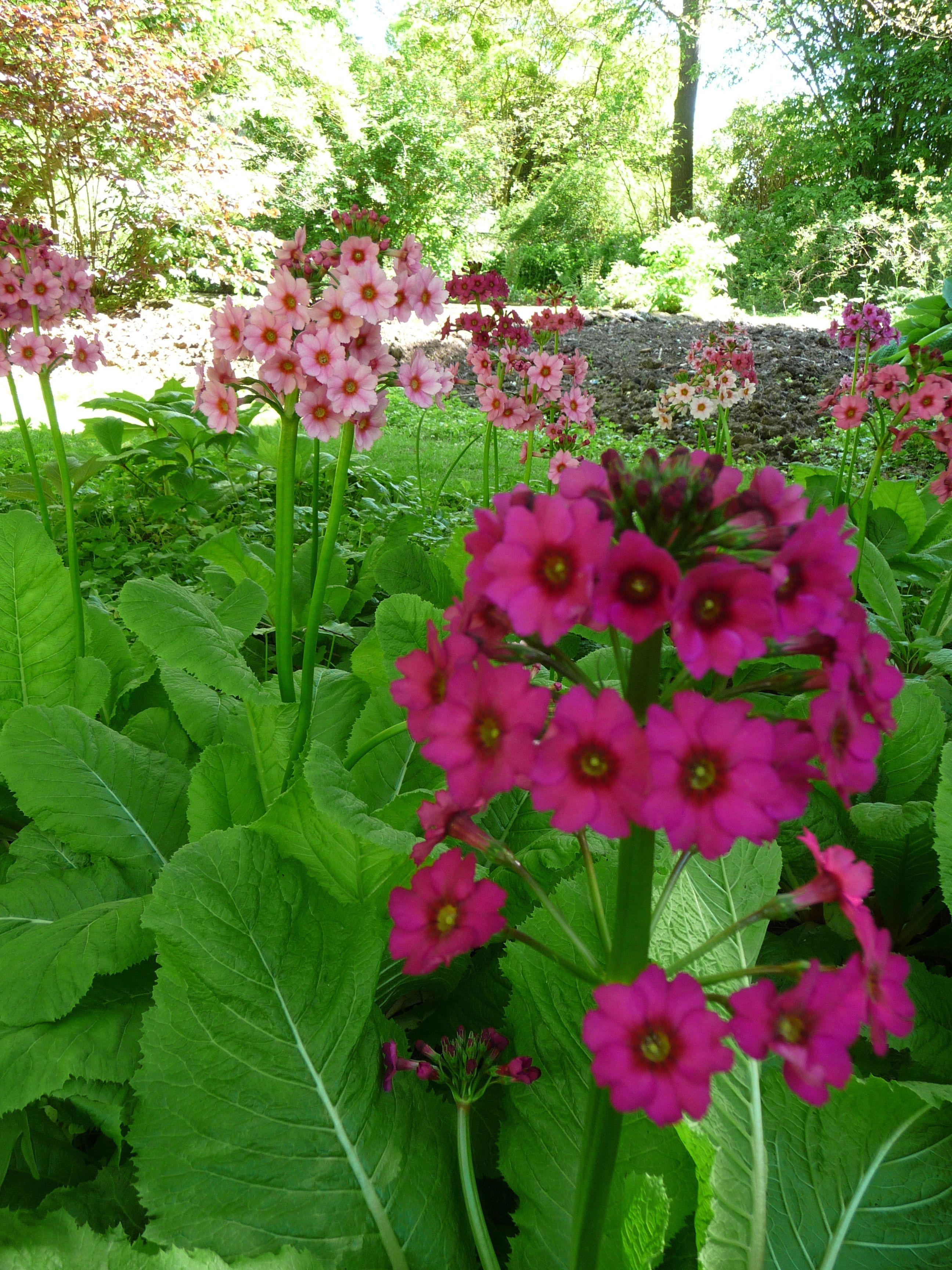 Bog garden plants Gardening Pinterest