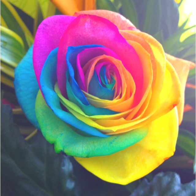 tye dye rose beautiful pinterest