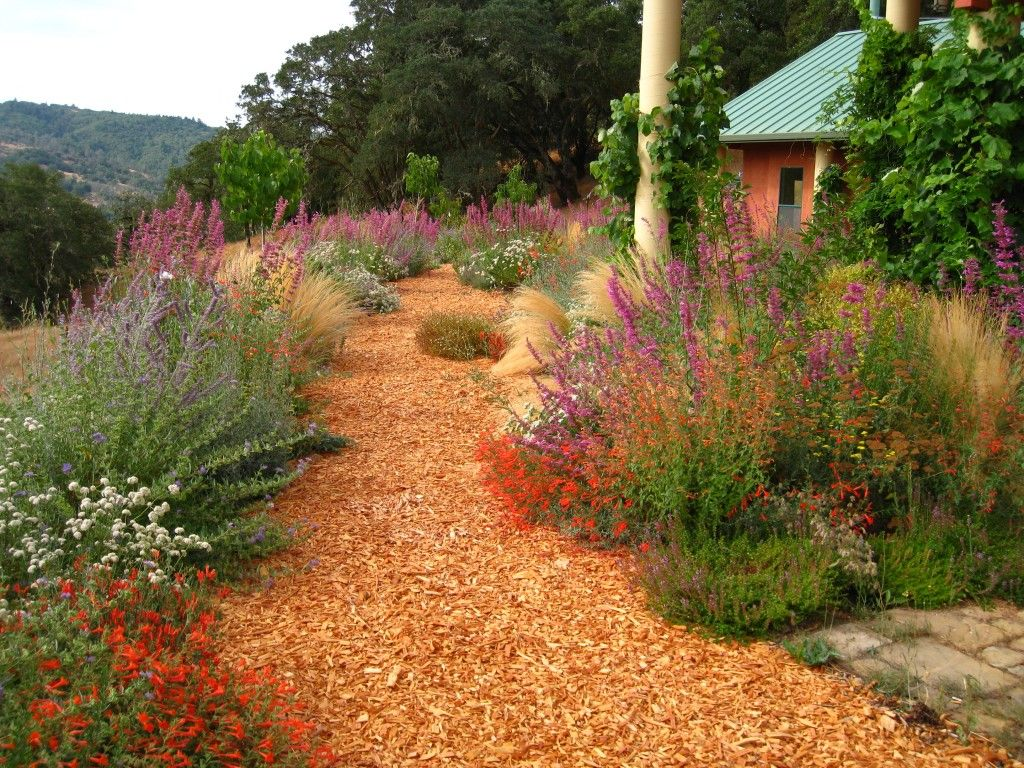 Path for drought tolerant garden to feather the nest for Drought resistant gardens