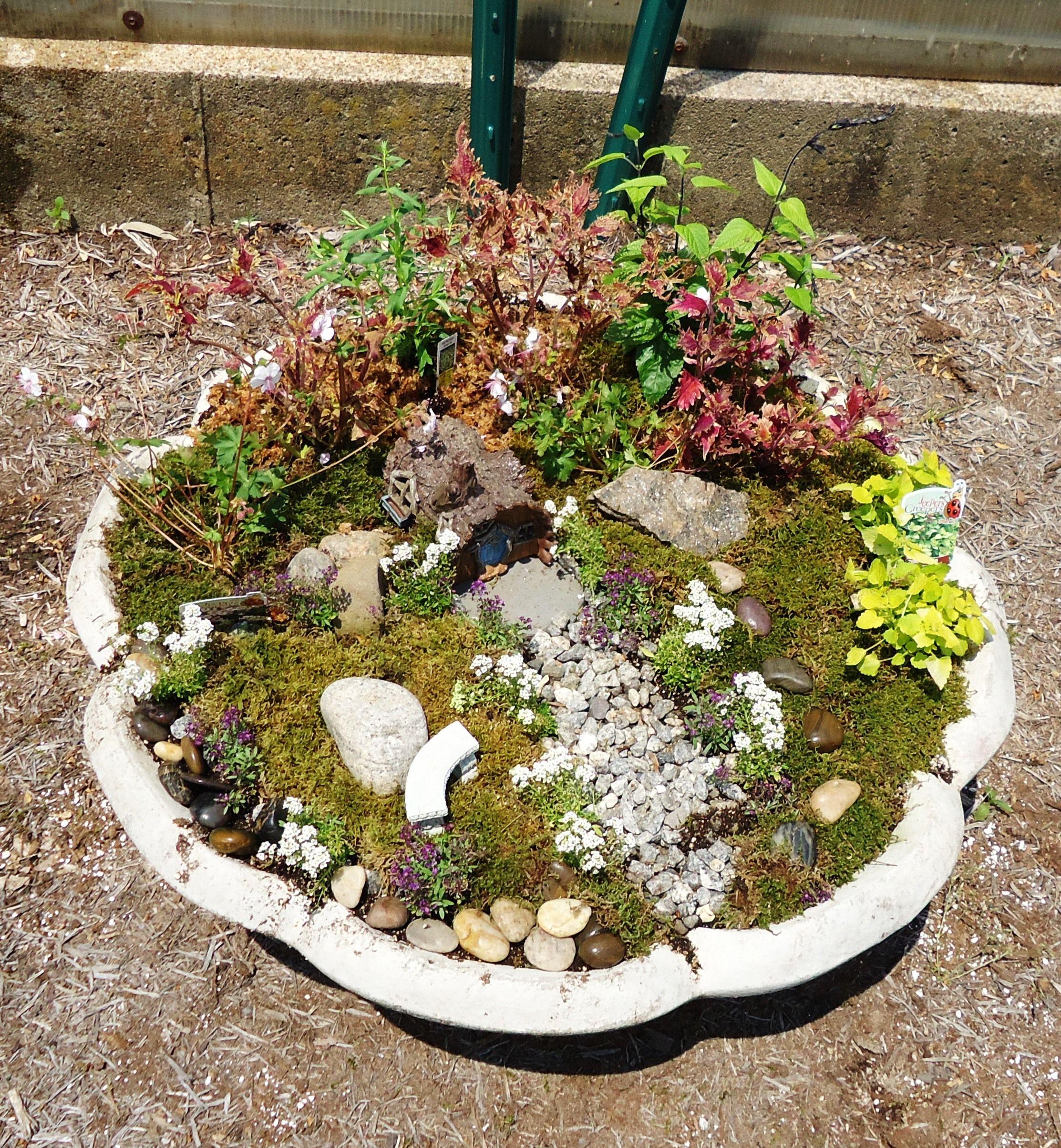 fairy garden in an old fountain top miniature gardening