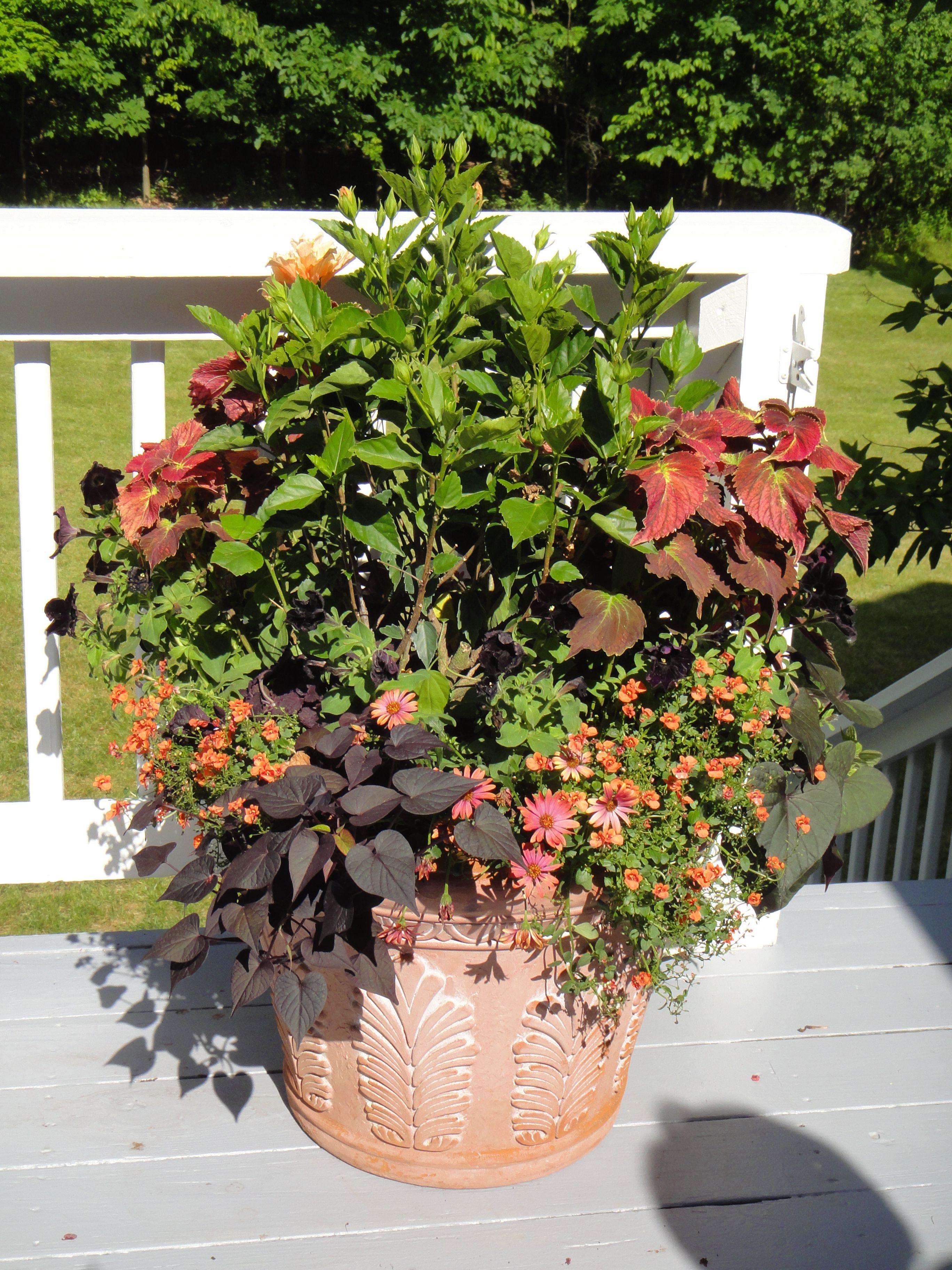 Container garden for full sun gardening pinterest - Container gardens for sun ...