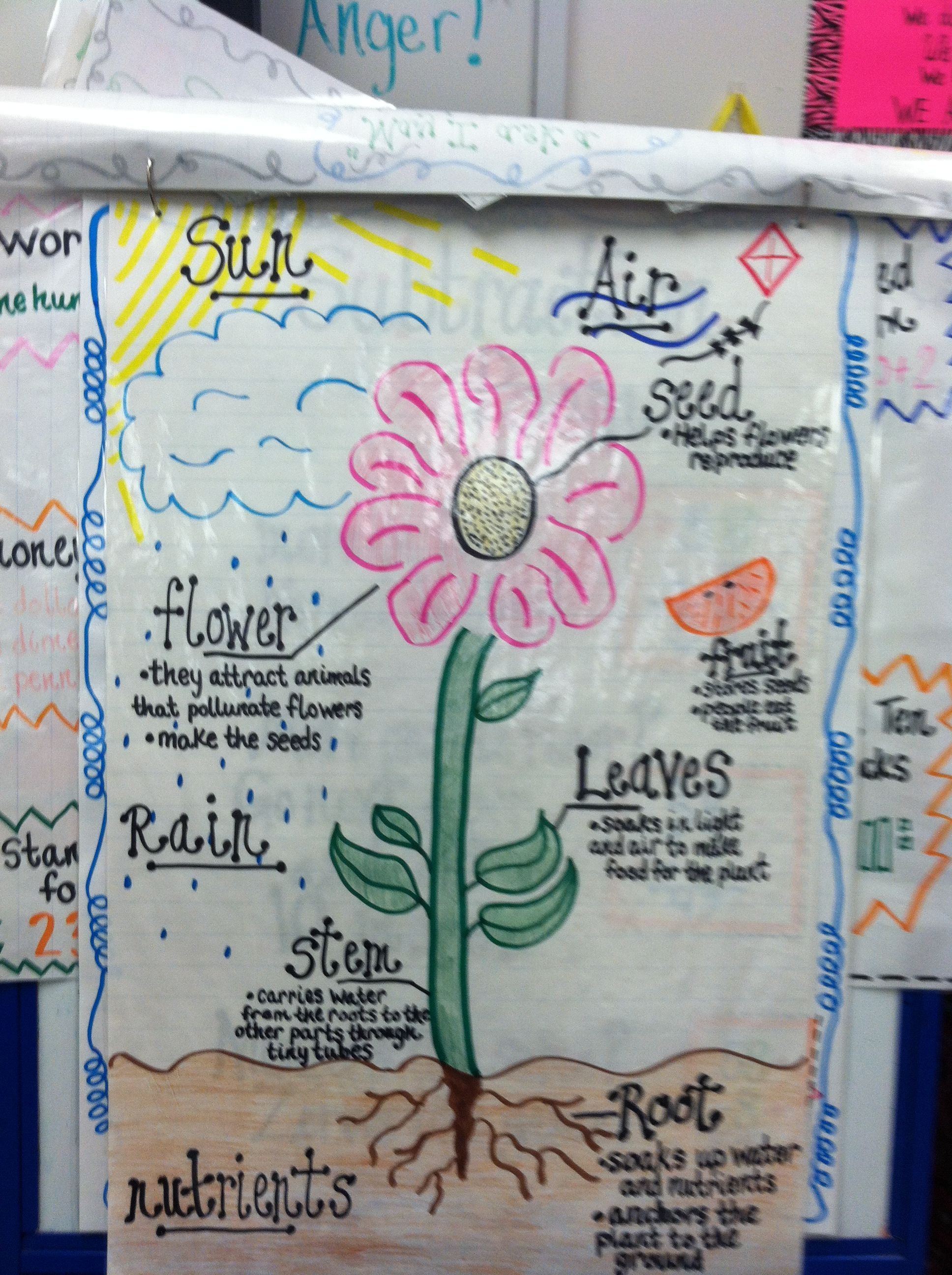 Plant Anchors : Plant Life Cycle Anchor Chart SCIENCE-Anchor Charts Pinterest