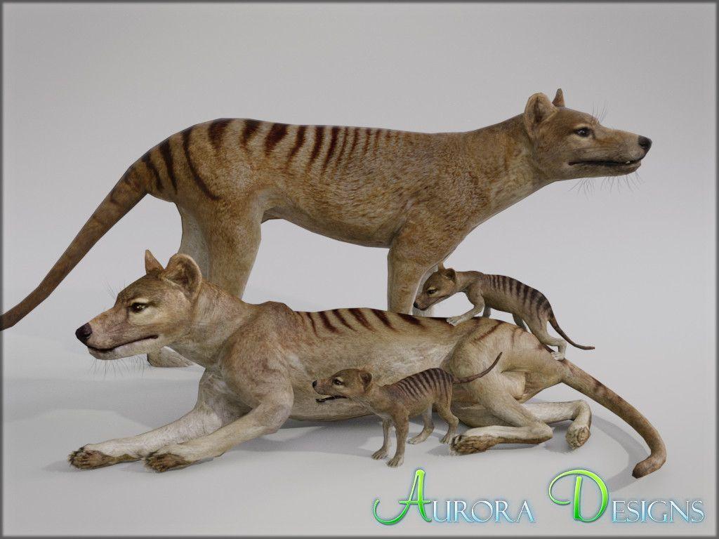 Thylacine sightings
