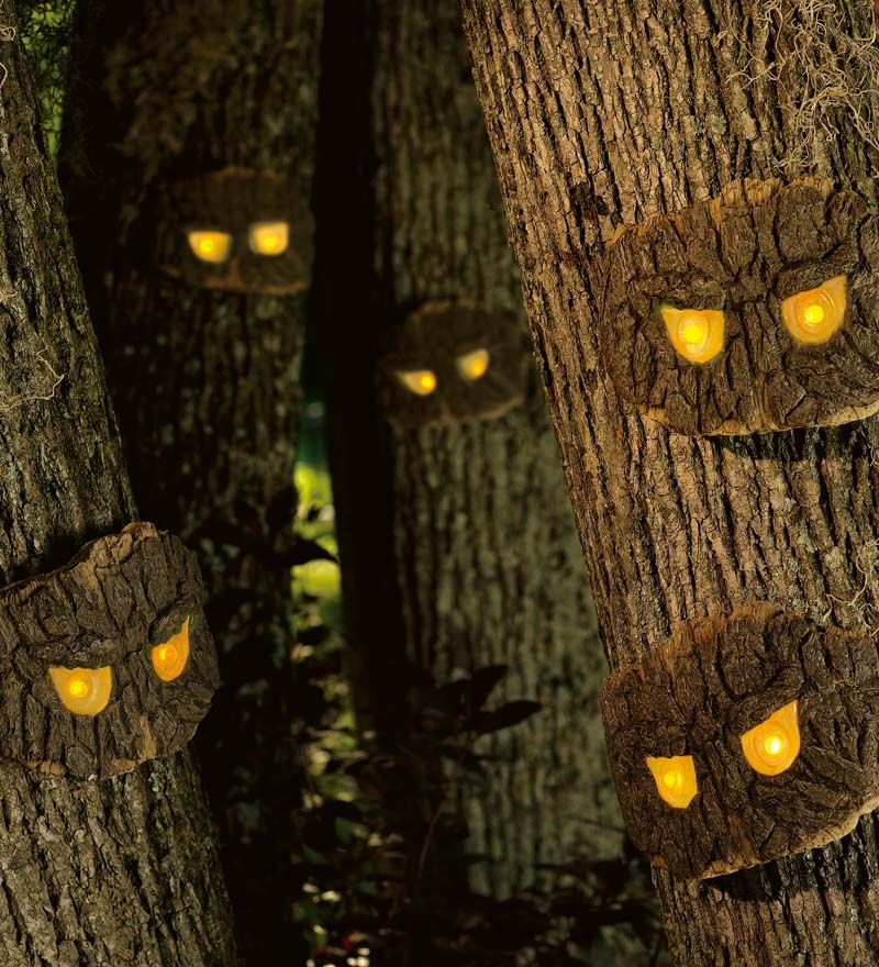 Backyard Haunted Forest Ideas : spooky tree eyes  Halloween  Pinterest