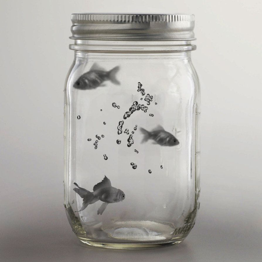 fish in a mason jar mason jar love pinterest