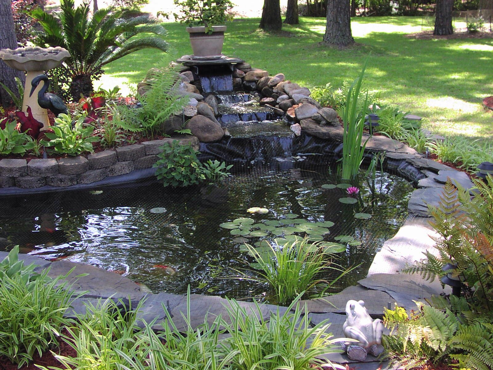 koi pond 1500 gallon hand dug dyi koi pond pinterest
