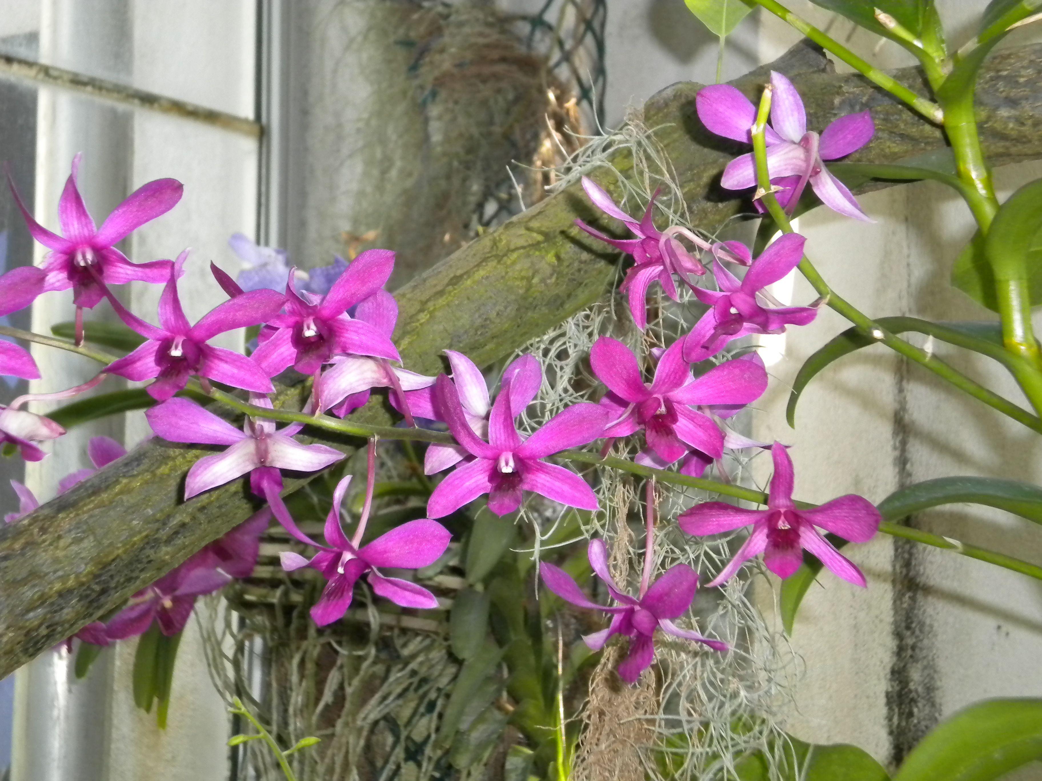 peque as orqu deas plantas flores jardines