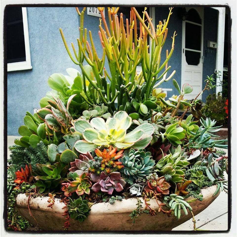 Succulent dish garden Cinco de mayo Pinterest
