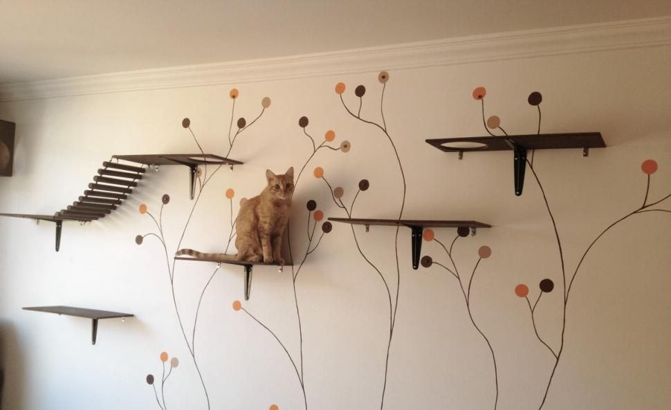 How to Catify Your Home for a Senior Cat forecast