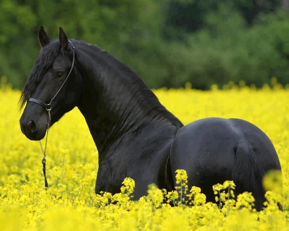 Image result for horses in flower fields