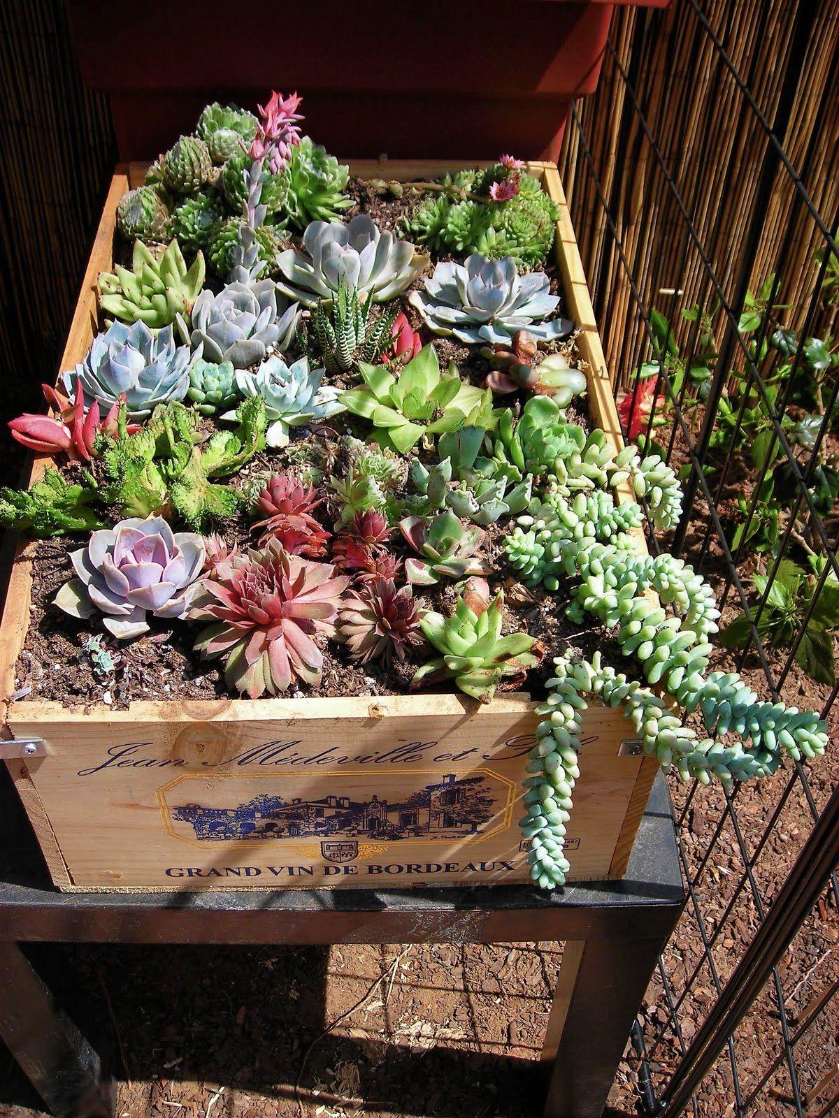 Succulent container gardens gardens pinterest - Decoracion de maceteros ...