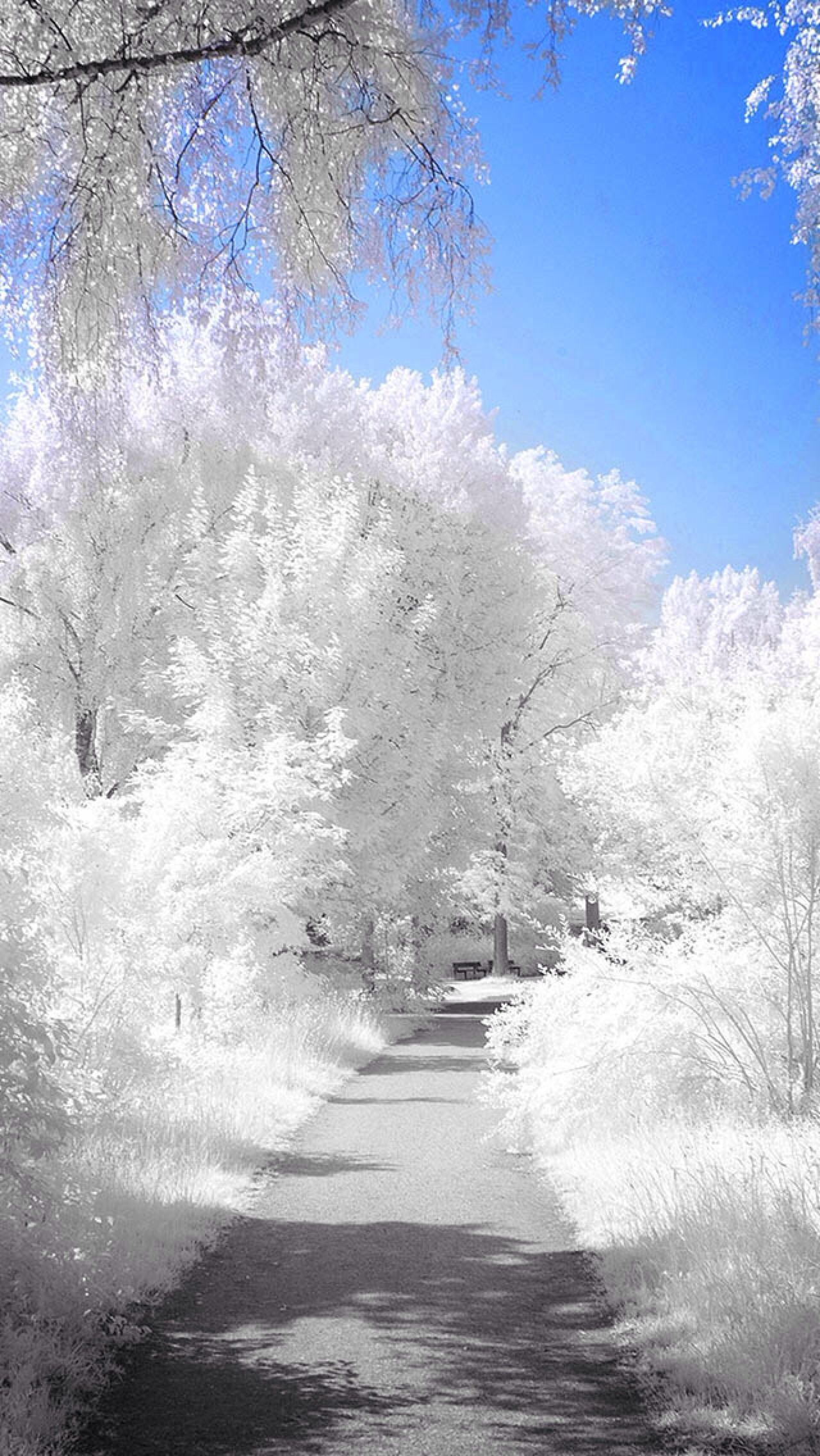 winter path iphone backgrounds pinterest
