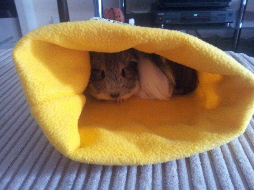 Brighton theme guinea pig sleeping bag | Guinea pig | Pinterest