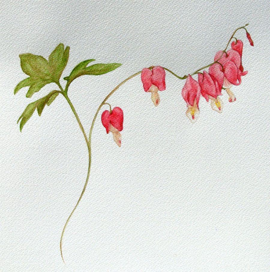 Bleeding Heart Flower Painting Bleeding Heart Flower Drawing