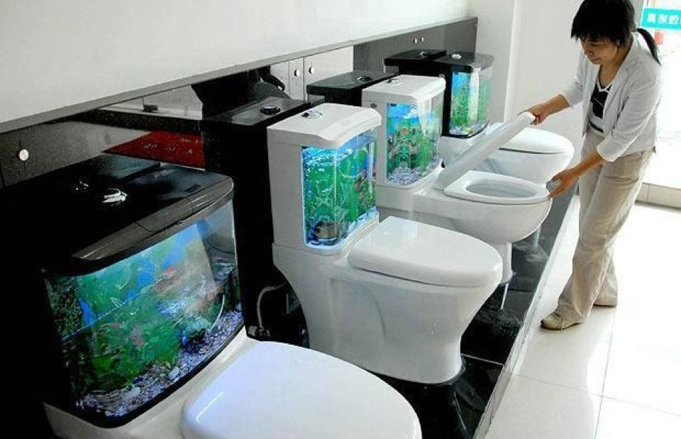 Fish tank toilets funny pinterest for Smart fish tank